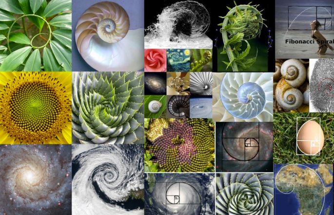 fibonnaci collage-spirals
