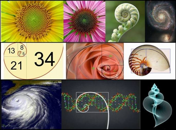 Examples of sacred geometry in nature